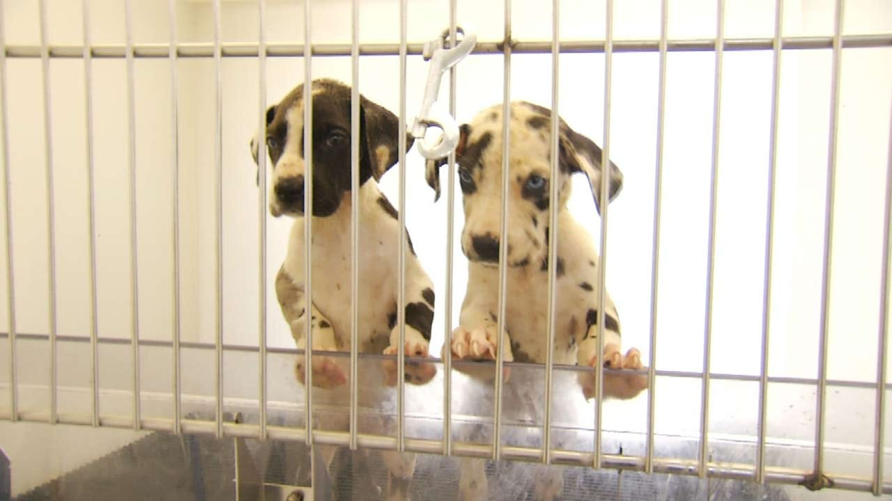 Four Puppies Dead In Mayes County Dog Dumping Case