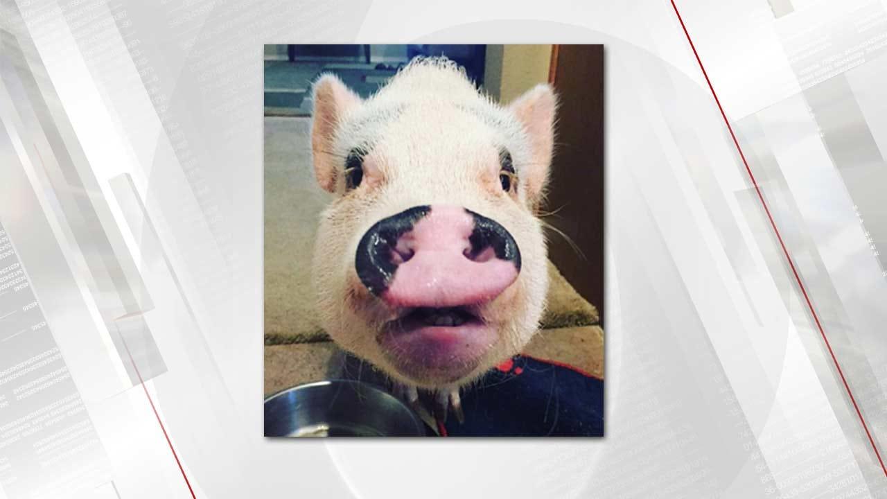 Watch Alan Crone Kiss Raisin The Pig Thursday Morning
