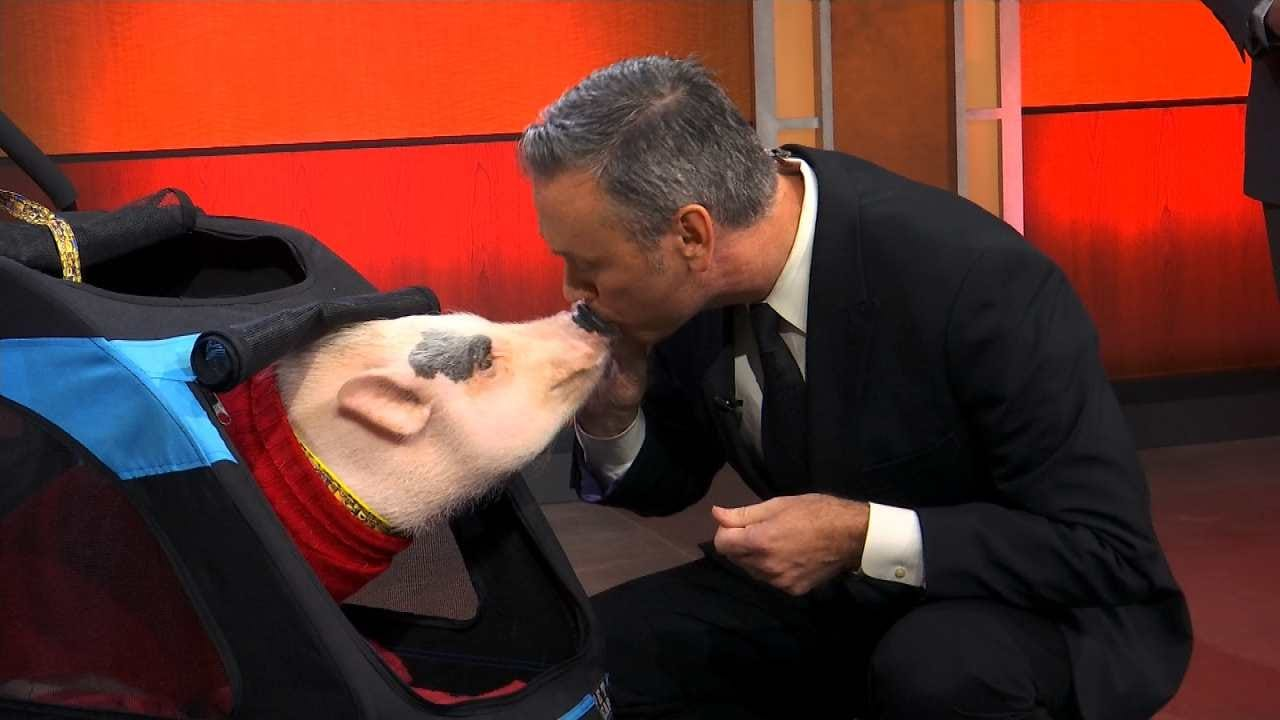 News On 6 Meteorologist Alan Crone Kisses A Pig On 6 In The Morning