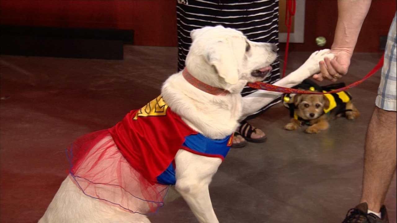 Tulsa Mutt Strut To Benefit DVIS Pet Shelter