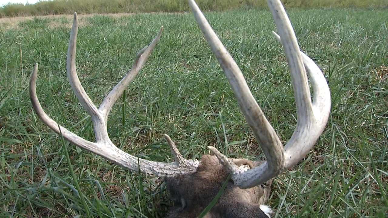 Poacher Kills Deer At Vinita Hunting Facility