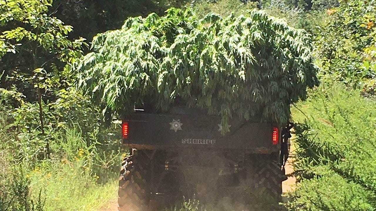 Haskell County Man Arrested In Marijuana Growing Operation Bust