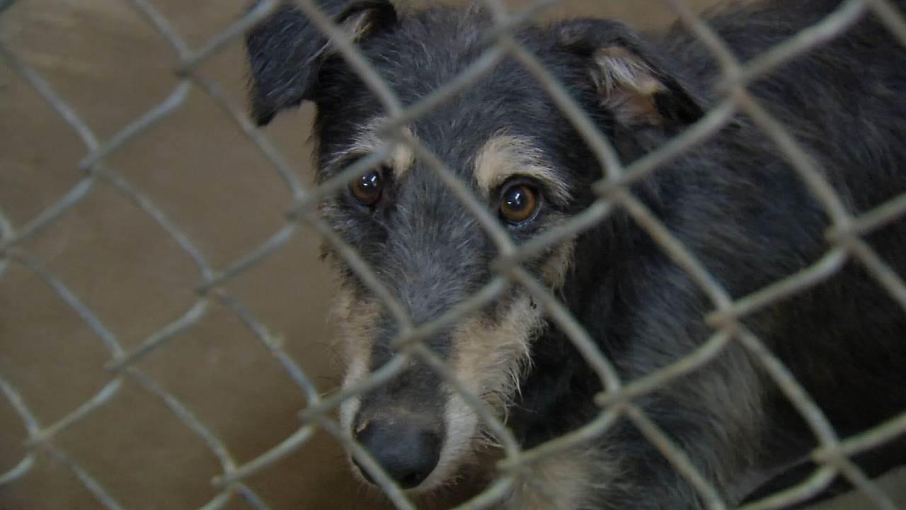 Humane Society Waiving Adoption Fees At Bixby Location