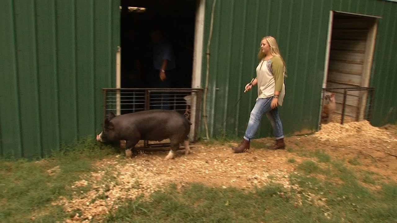 Show Pig Sells For Thousands To Honor Late Locust Grove Teen