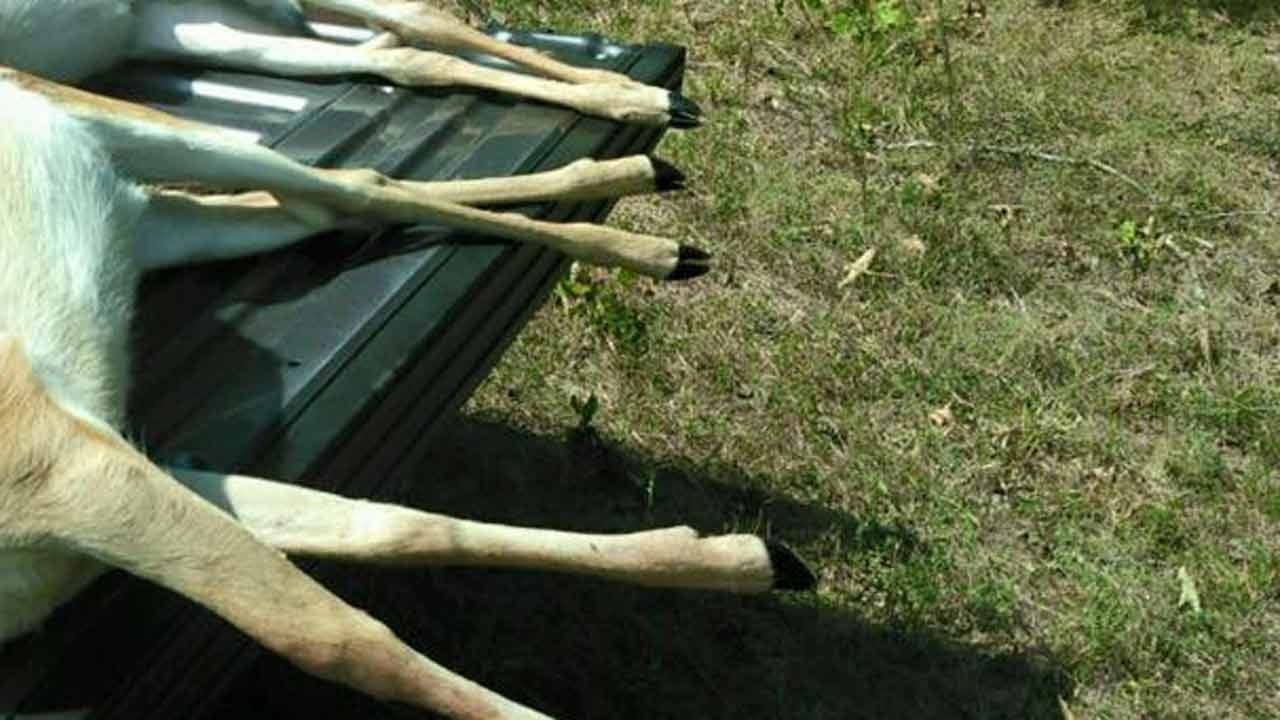 Reward Offered For Tips In Cherokee County Fawn Deaths