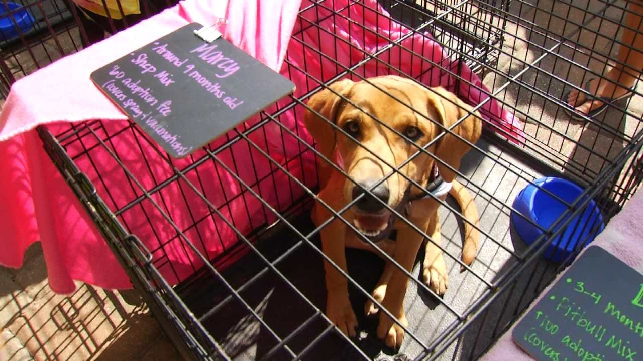 Animal Rescue Groups Unite For Woofstock In Jenks