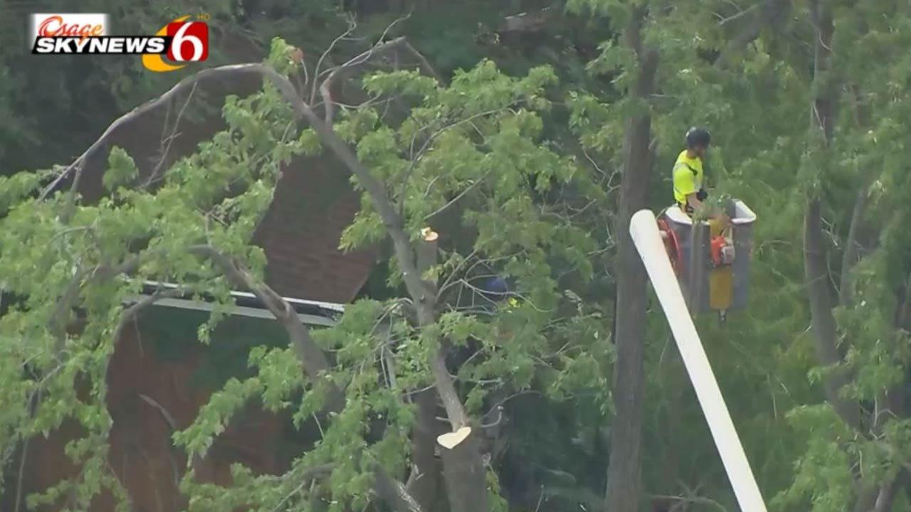 Tulsa Owl Advocates Surprised By Tree Removal Crew