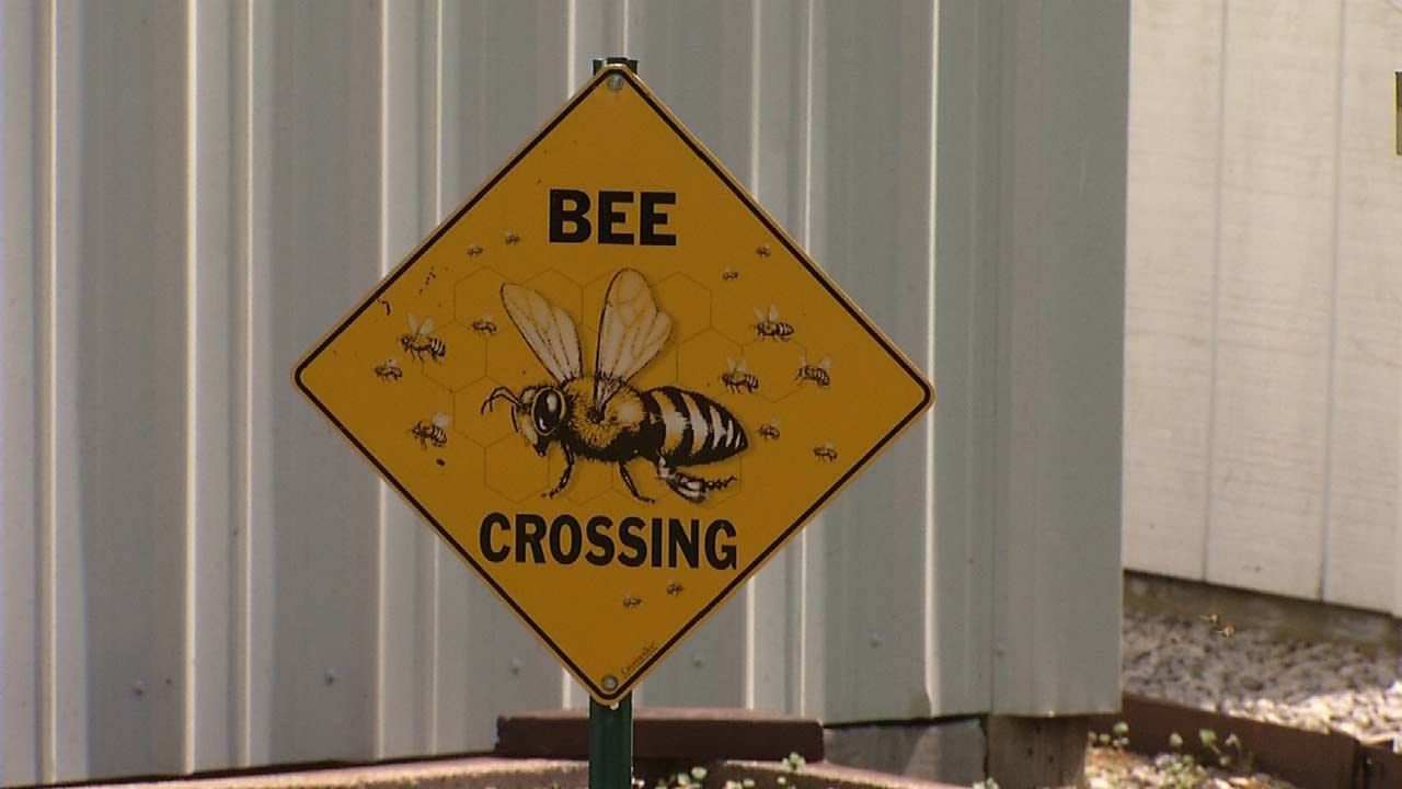 Beekeepers Urge Oklahomans To Rescue, Not Exterminate, Bee Swarms