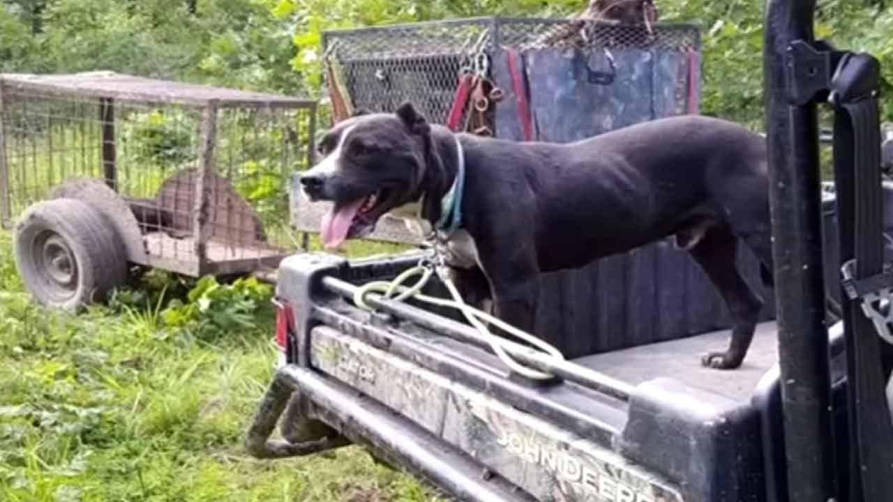 Pittsburg County Family Says Deputies Killed Pitbull Unnecessarily