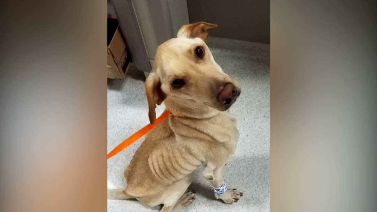 Veterinarians Want OK Pet Owners To Be Aware Of Rare Deadly Illness