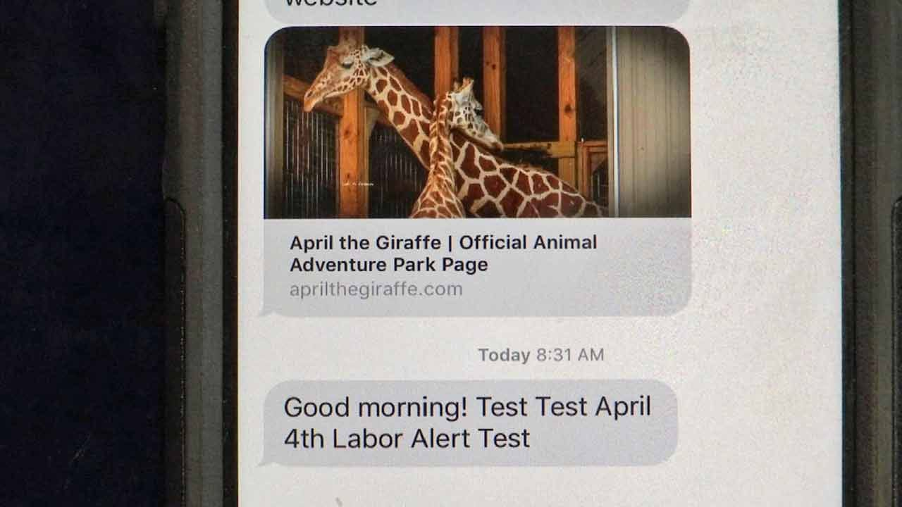 Jay Man Writing Text Alerts For April The Giraffe