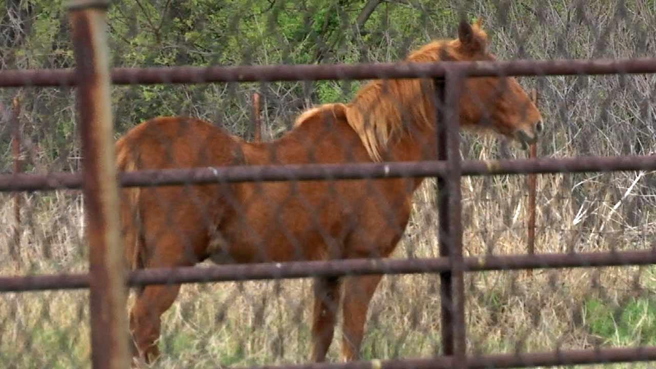Tulsa Rancher's 20-Year-Old Horse Stolen