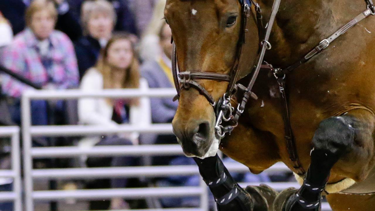 OSU: Seven Cowgirls Named NCEA All-Americans