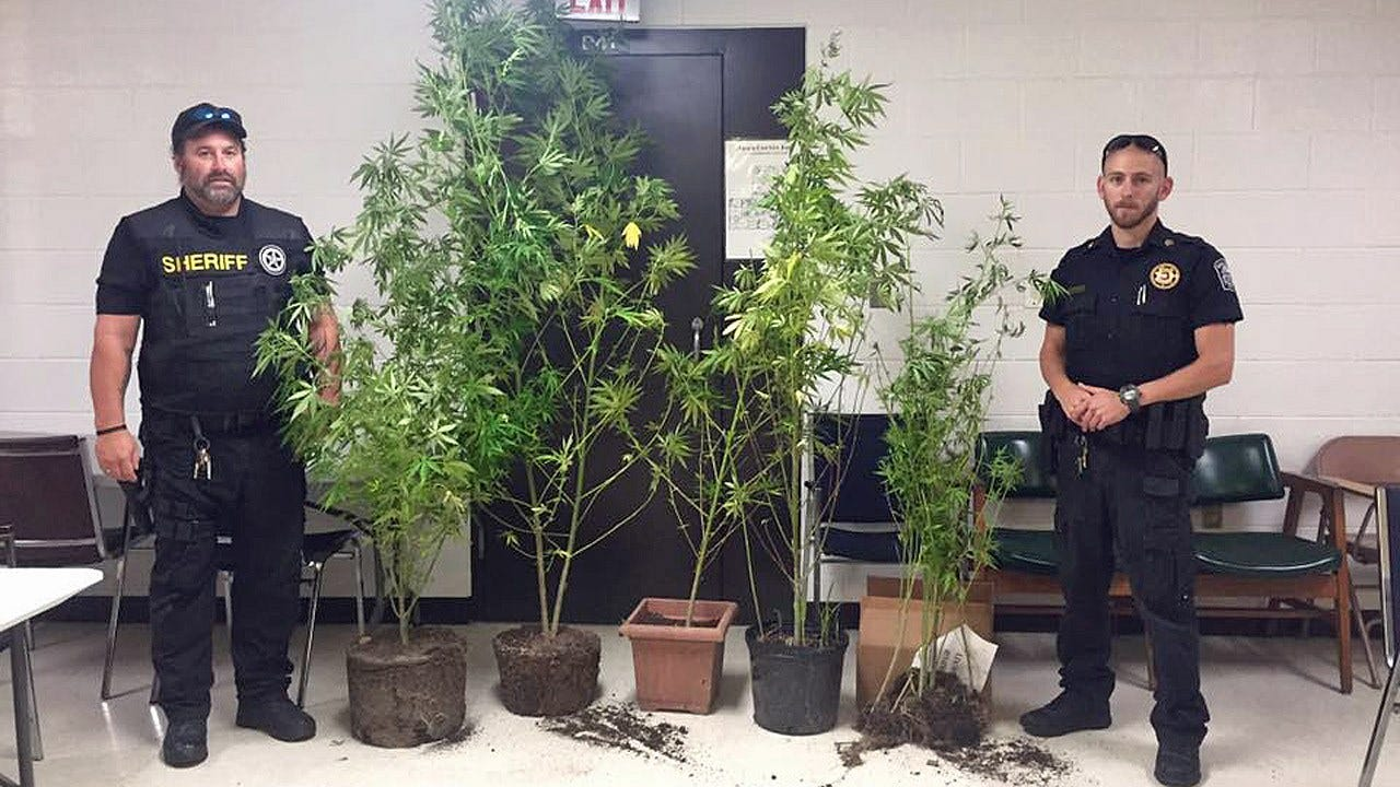 Adair County Deputies Find Pot Plants During Search For Suspect