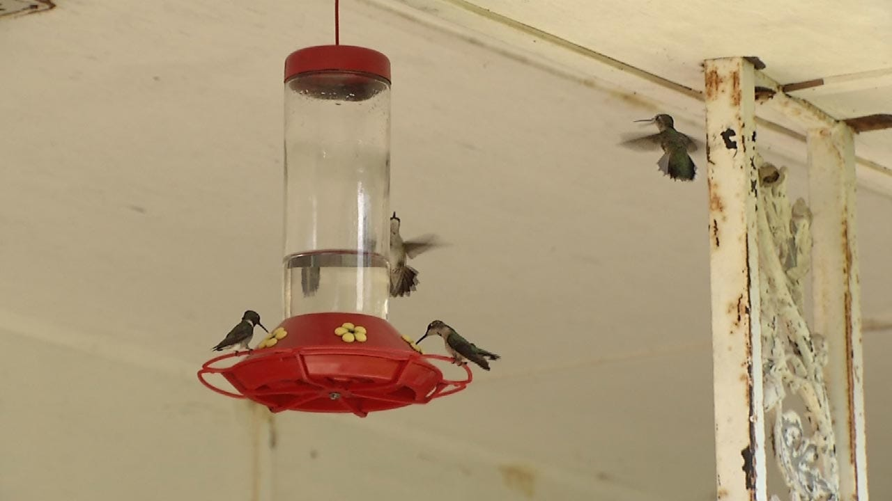 Rogers County Couple's Home A Hummingbird Magnet