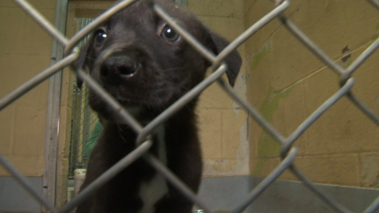 Hundreds Of Dogs, Cats Adopted At Tulsa Clear The Shelter Event