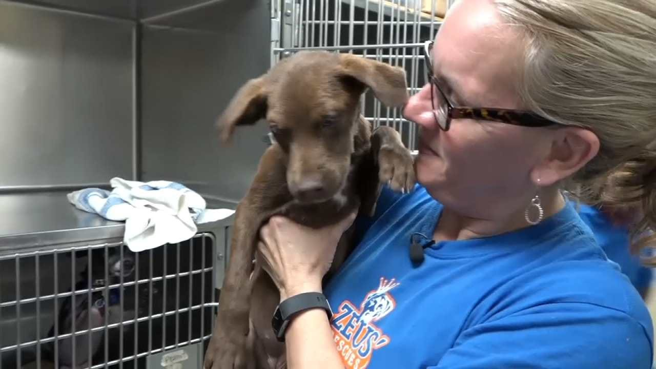 Tulsa Humane Society Has Team In Houston Helping At Animal Shelters