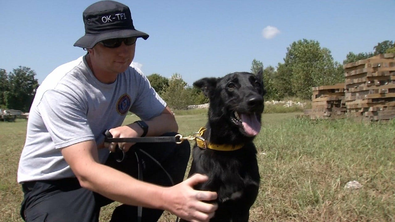 Oklahoma Search, Rescue Dogs Ready To Help With Harvey