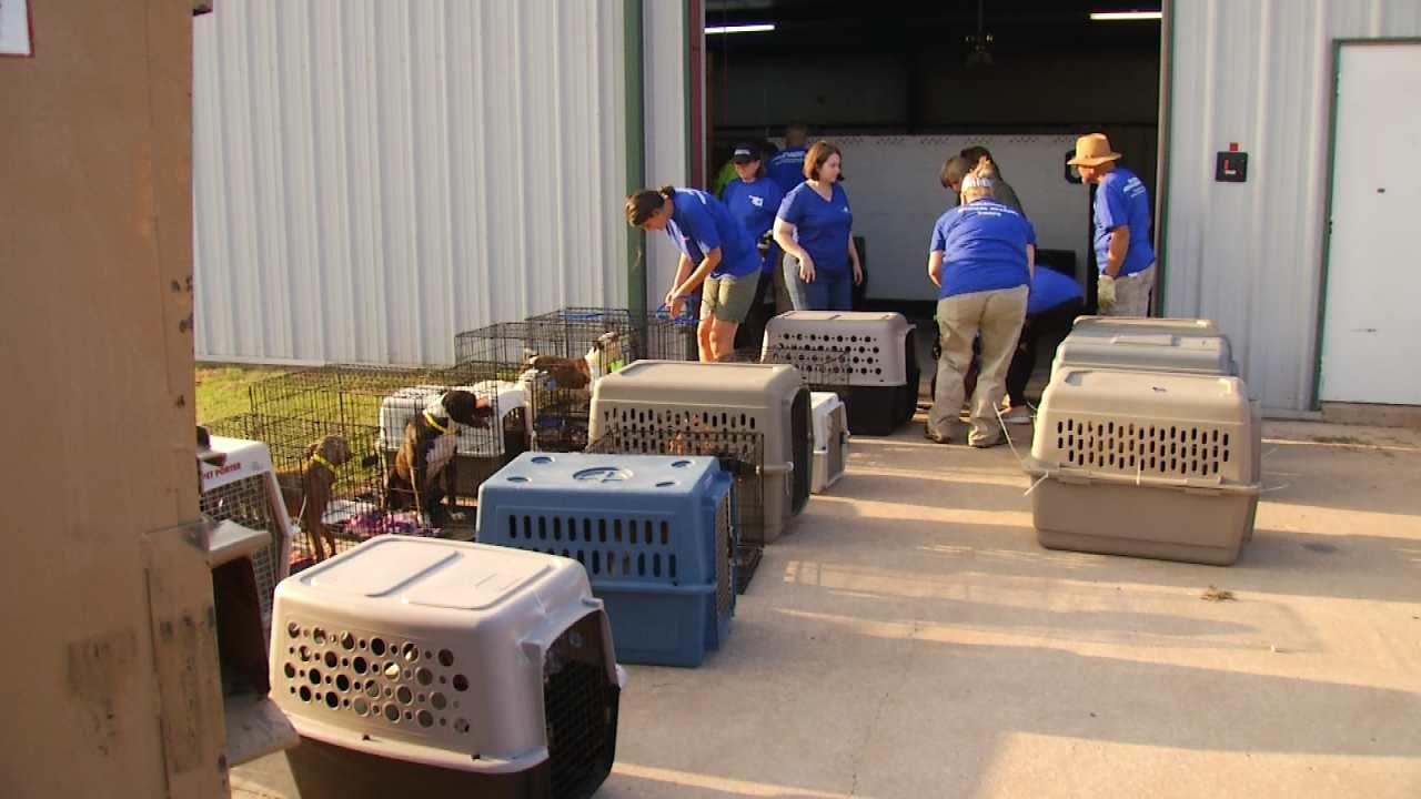 Tulsa Humane Society Welcomes Dogs Rescued From Houston Flooding
