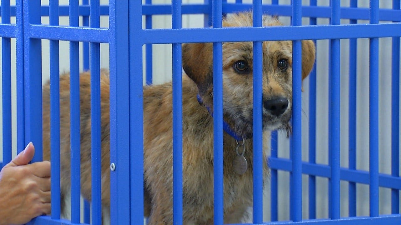 Tulsa Humane Society In Bixby Refuses New Dogs Amid Air Conditioning Trouble