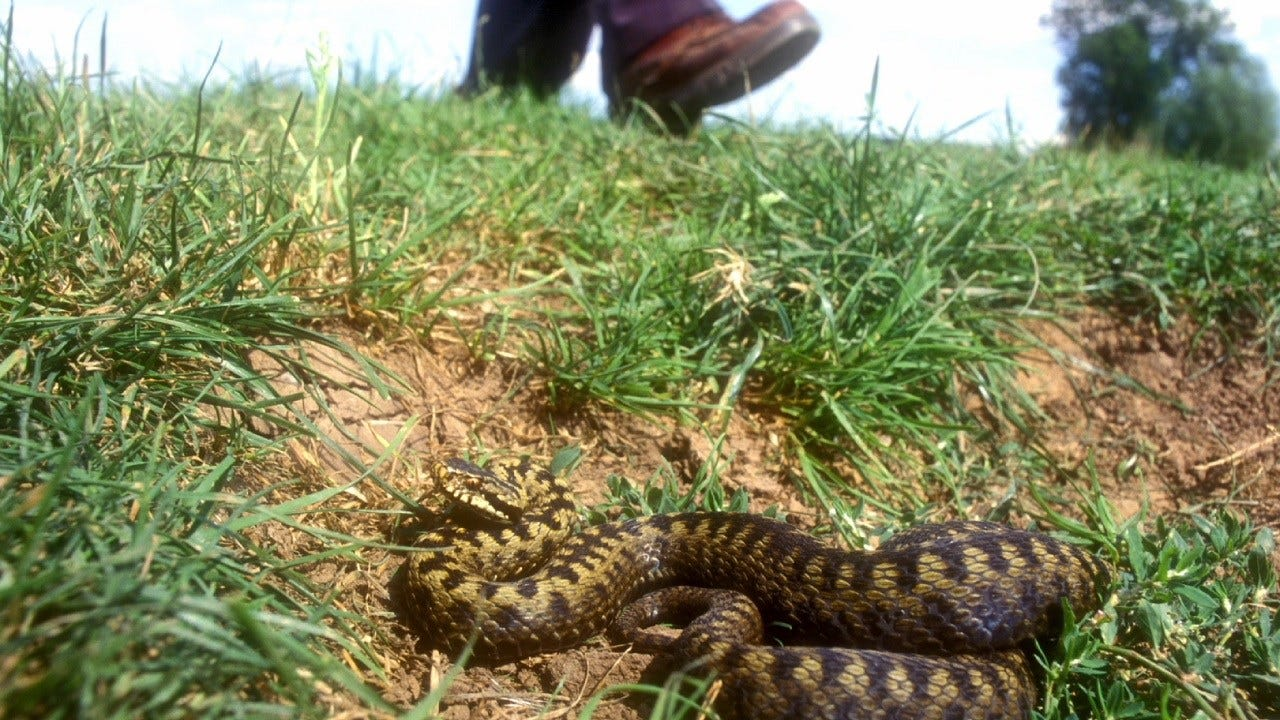 Experts Urge Caution With Influx Of Snakes In Oklahoma