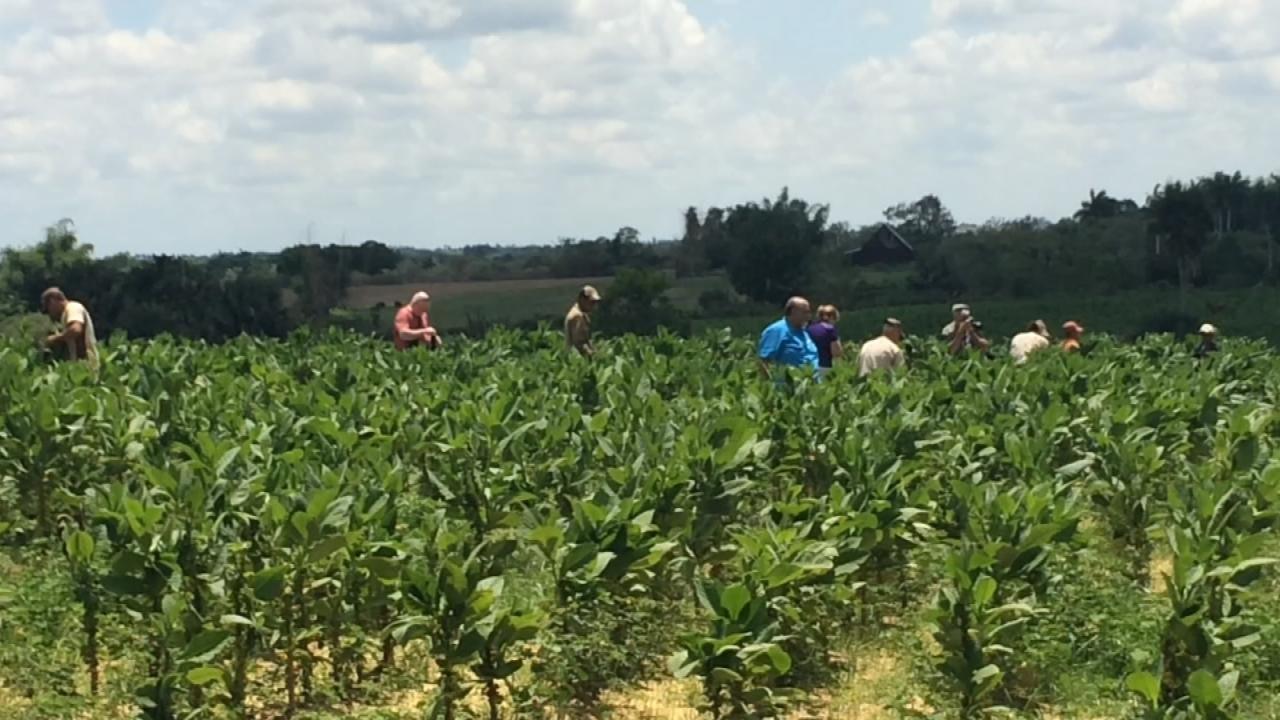 Rick Wells In Cuba: Tobacco Farm Tour