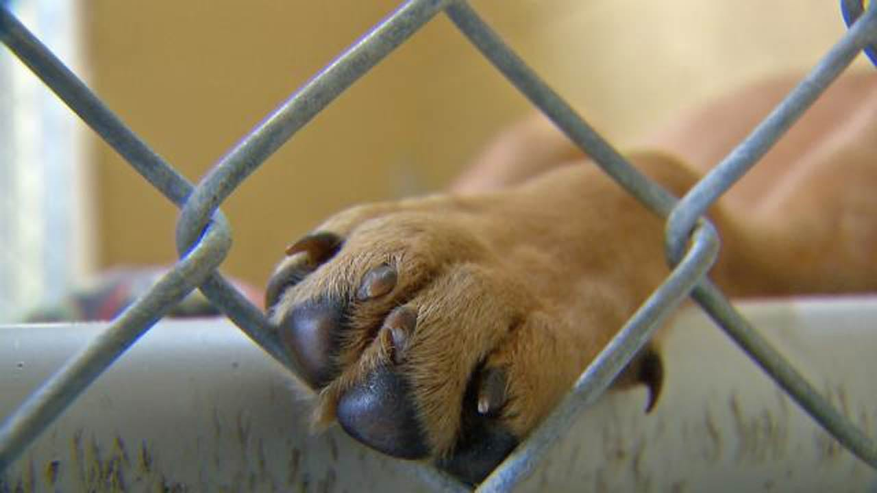 Overstock.Pet After-Hours Adoption Event Set For Friday In Tulsa