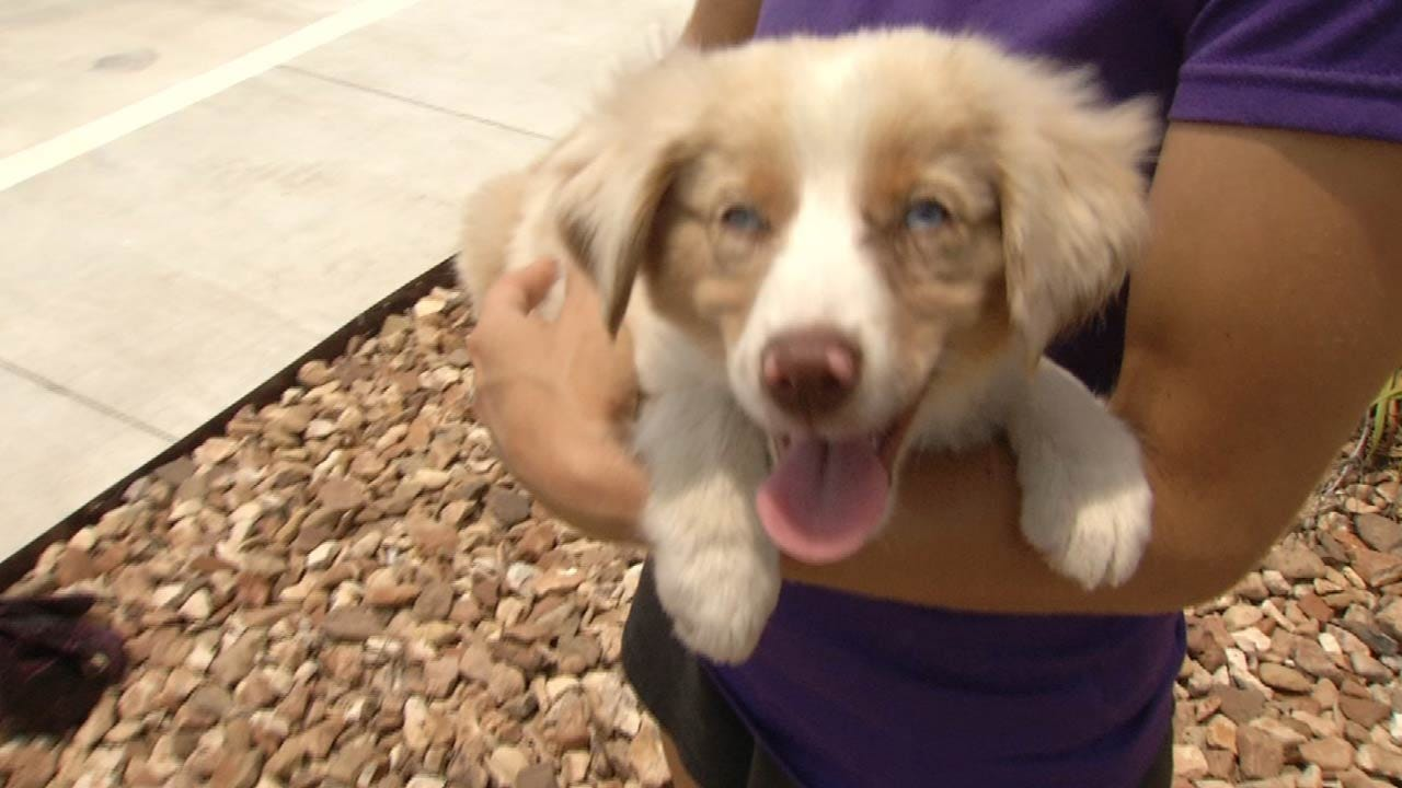 Security Footage, Facebook Post Lead McAlester Police To Stolen Puppy