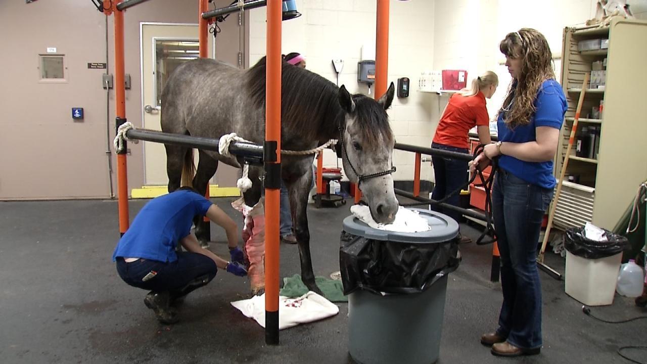 OSU Vet Hospital Aids Two Elk City Horses After Tornado