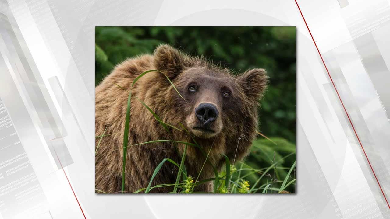 Tulsa Man Wins National Wildlife Photo Contest