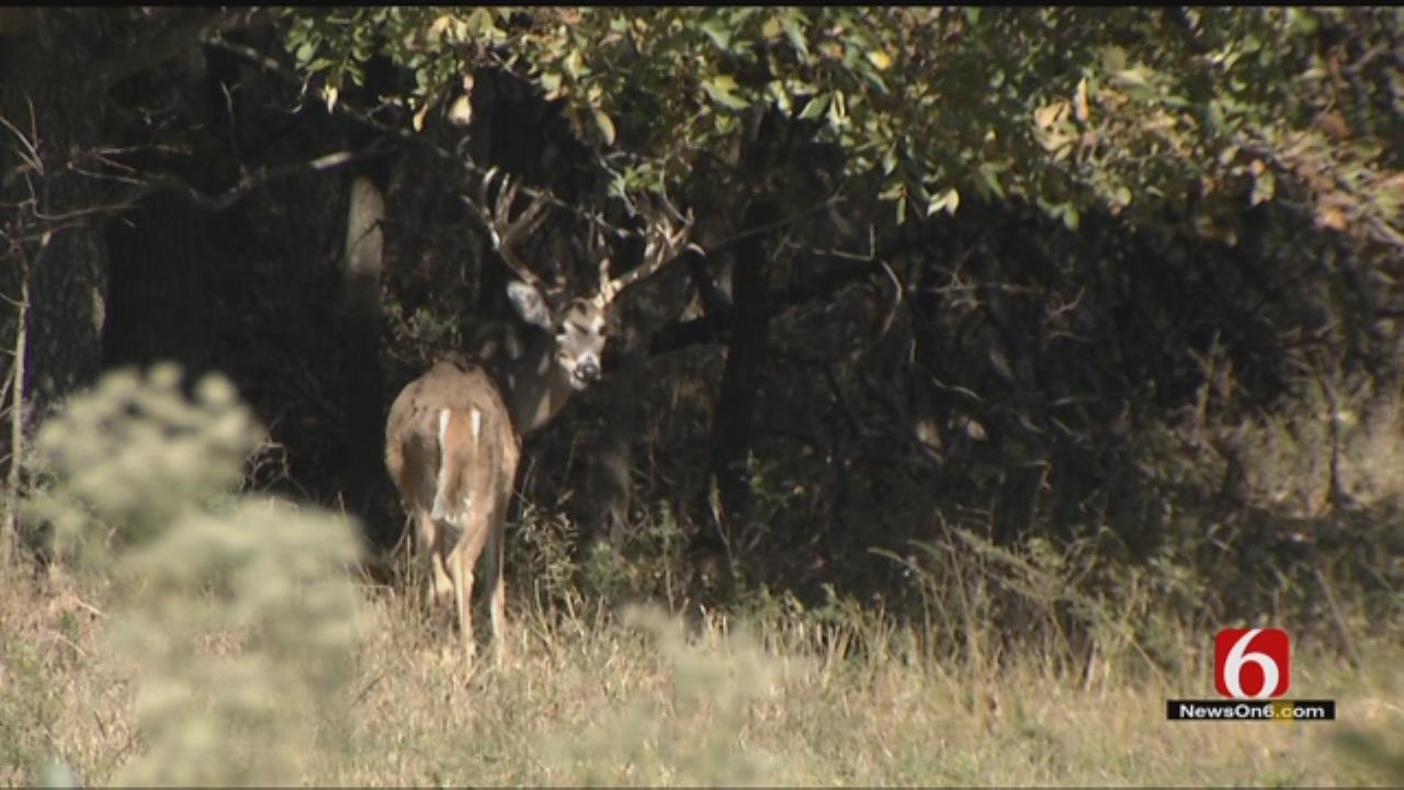 Oklahoma Deer Poaching Starts Earlier Than Usual