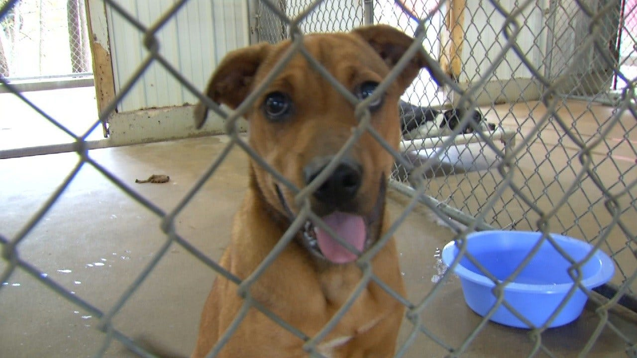 Euthanization May Be Only Option For Overcrowded Sapulpa Animal Shelter