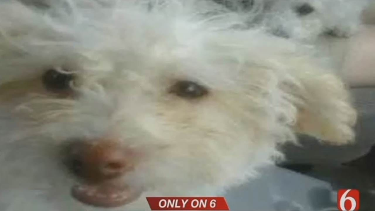 City Of Tulsa Fires Employee Accused Of Beating Dog To Death