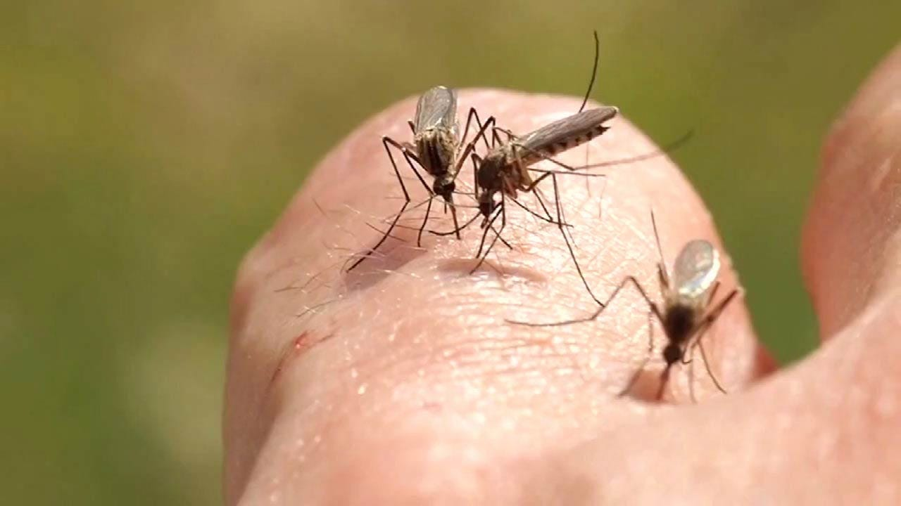 Mosquito Count High Due To Recent Mild Weather, Health Officials Say