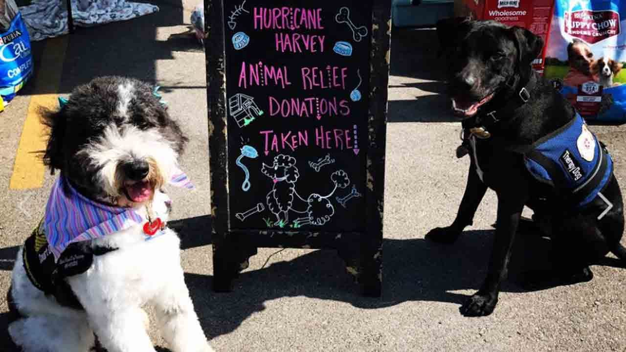 Rogers County Therapy Dog T-Shirts Benefit Pets Displaced By Disaster