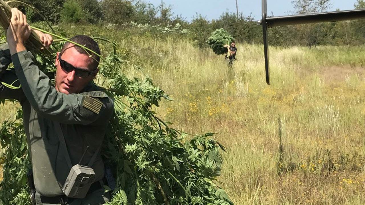 Two Arrested For Marijuana Growing Operation In McIntosh County