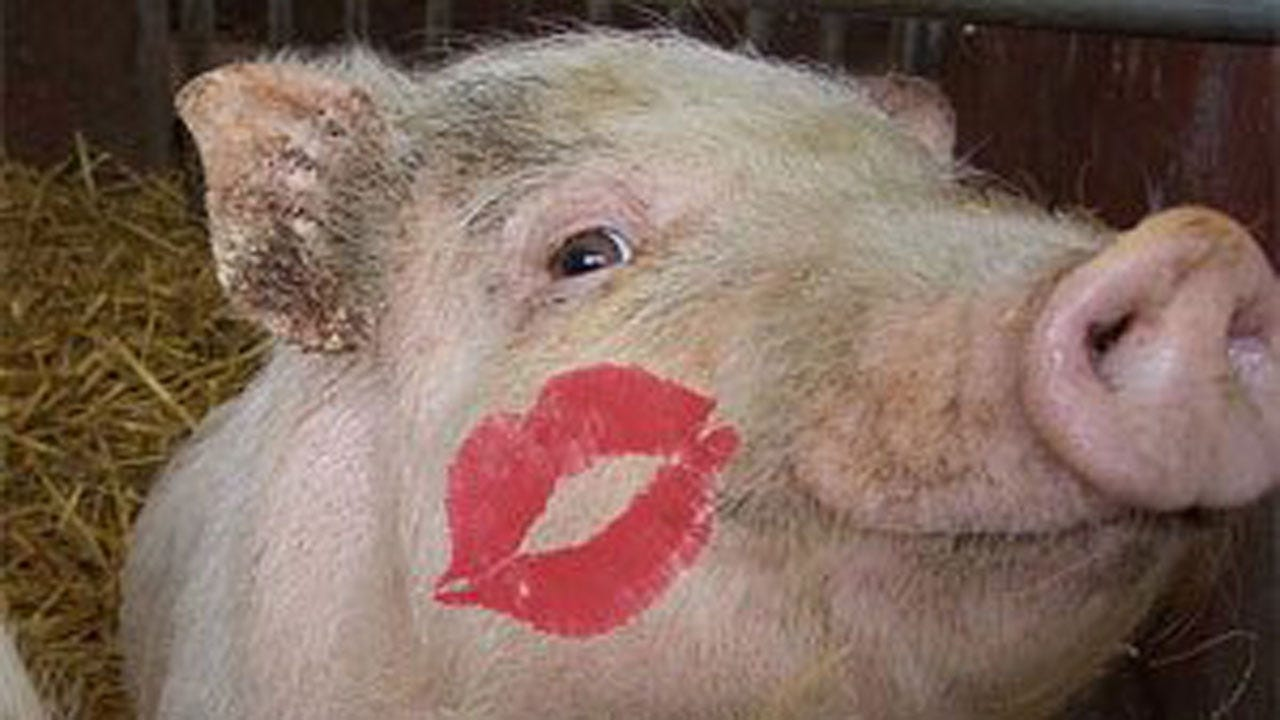 Fair-Goer Predicts Travis Meyer's Pig-Kissing Fate