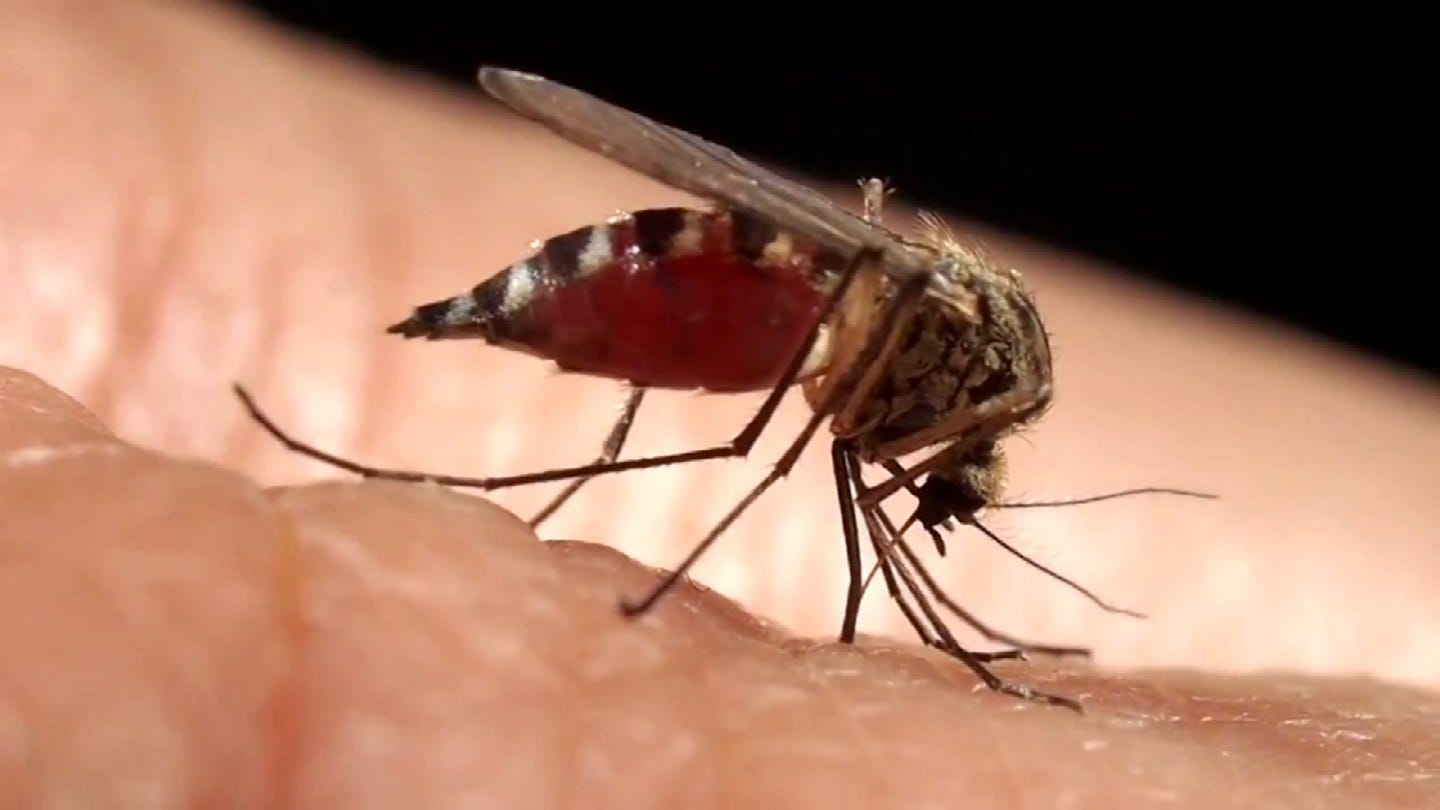 Tulsa Health Department Working To Protect The Community From Mosquitoes