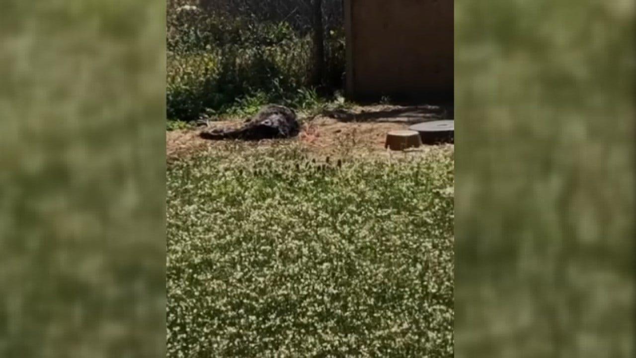Animal Rescue Group Discovers Gruesome Scene In Tulsa Backyard