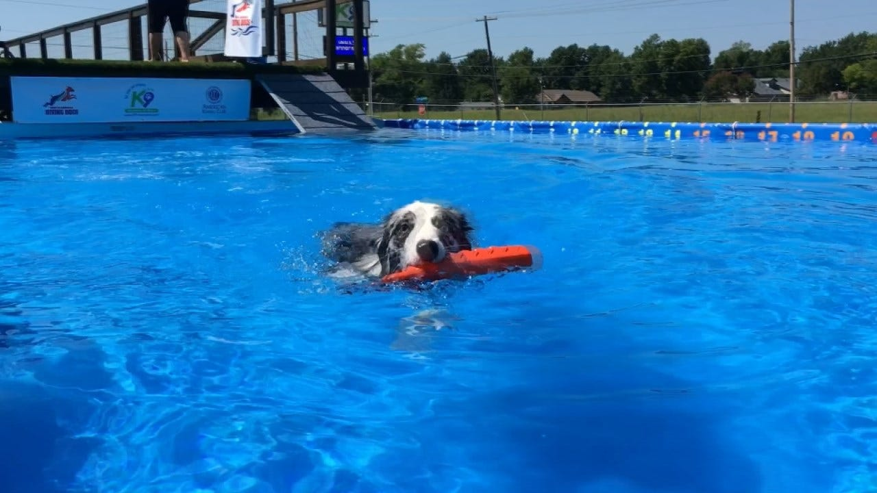 Broken Arrow Dog Dock Diving Competition Held At K9 Manners & More