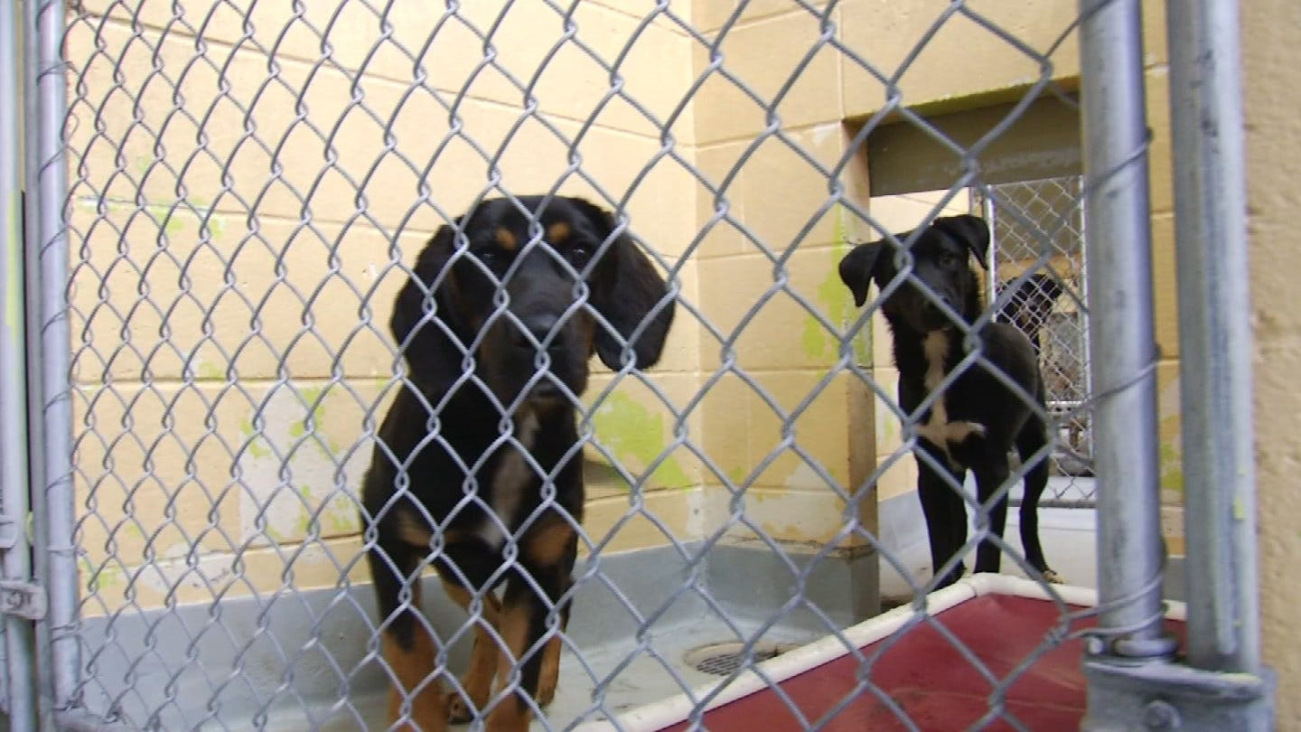 City Of Tulsa Animal Welfare Shelter Severely Overcrowded