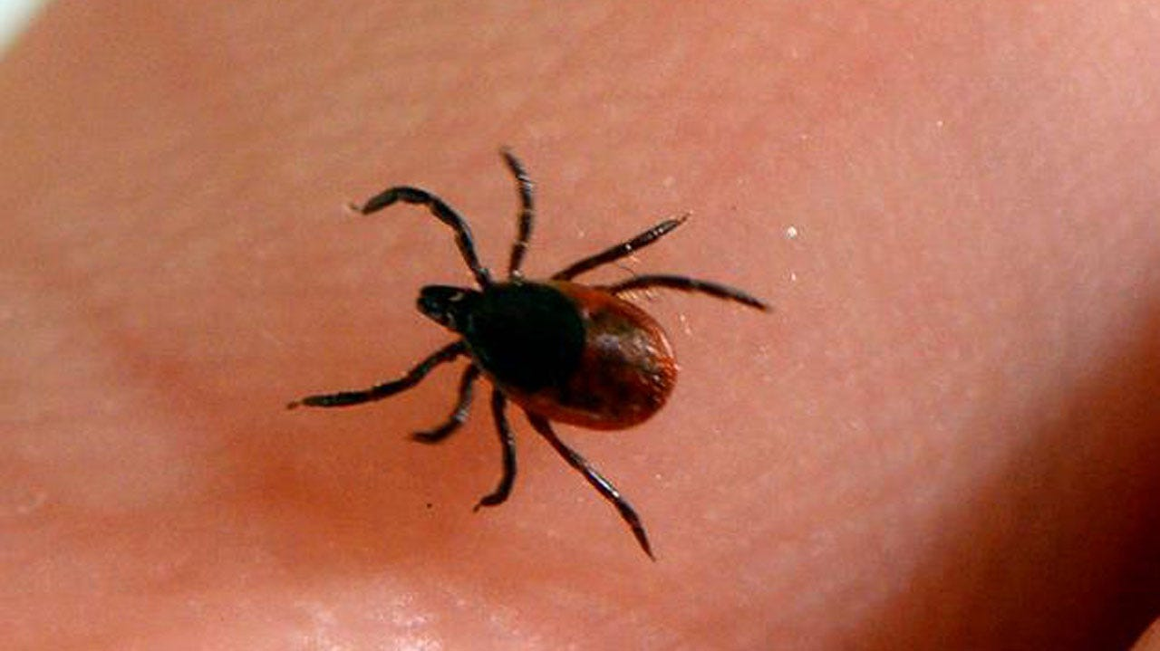 Lyme Disease Has Now Spread To All 50 States, Report Finds