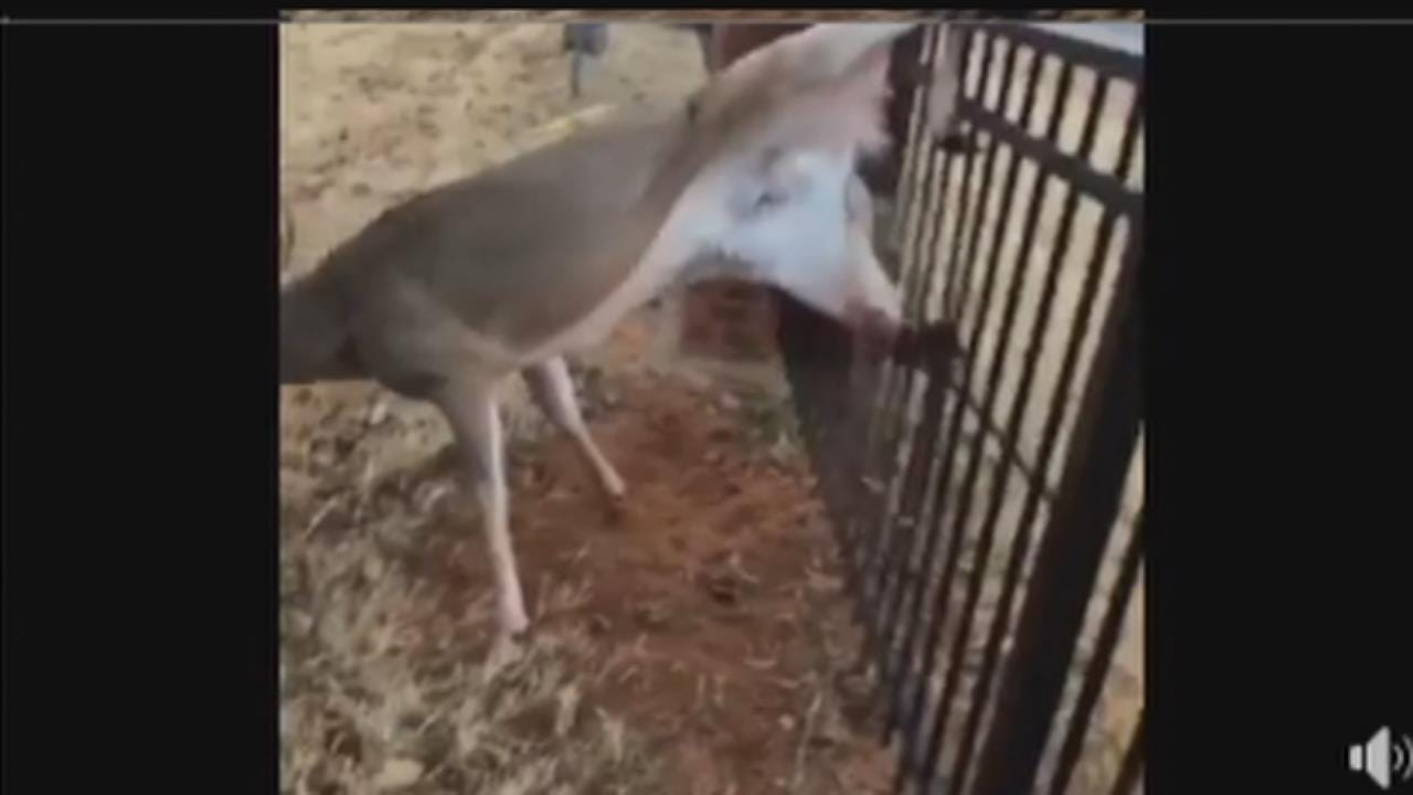 Oklahoma Firefighters Free Deer Stuck In Fence