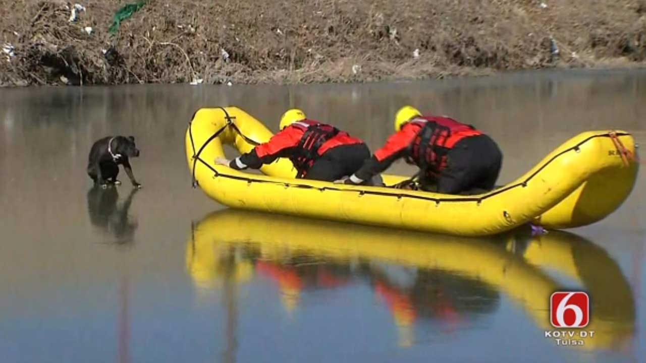 RESCUED: Dog Stuck On Frozen Tulsa Creek