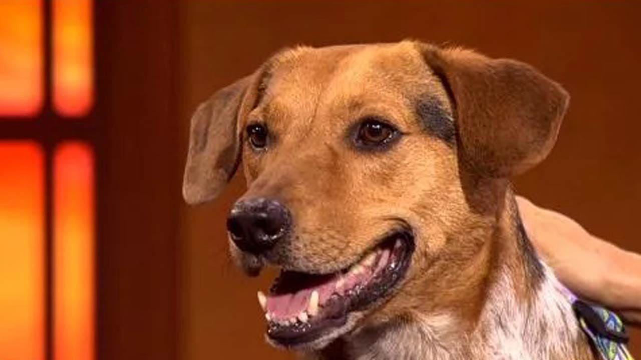 Radar, News On 6's Weather Dog, Is Retiring