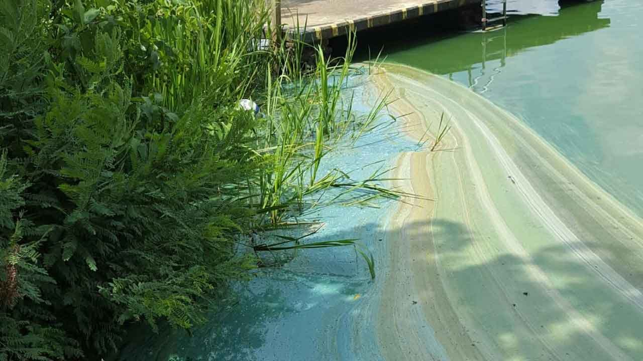 Swimming Areas, Boat Ramp Closed At Cedar Lake Due To Blue Green Algae