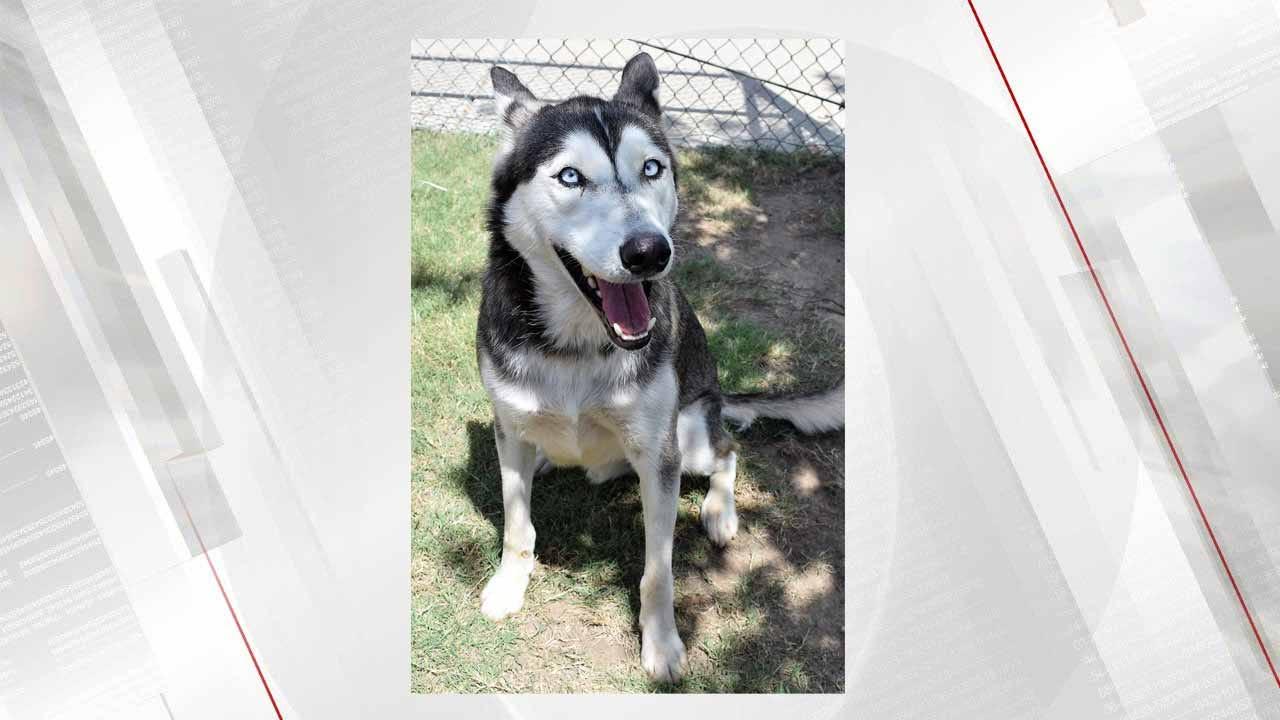 OKC Family Reunites With Stolen Dog Found In Broken Arrow