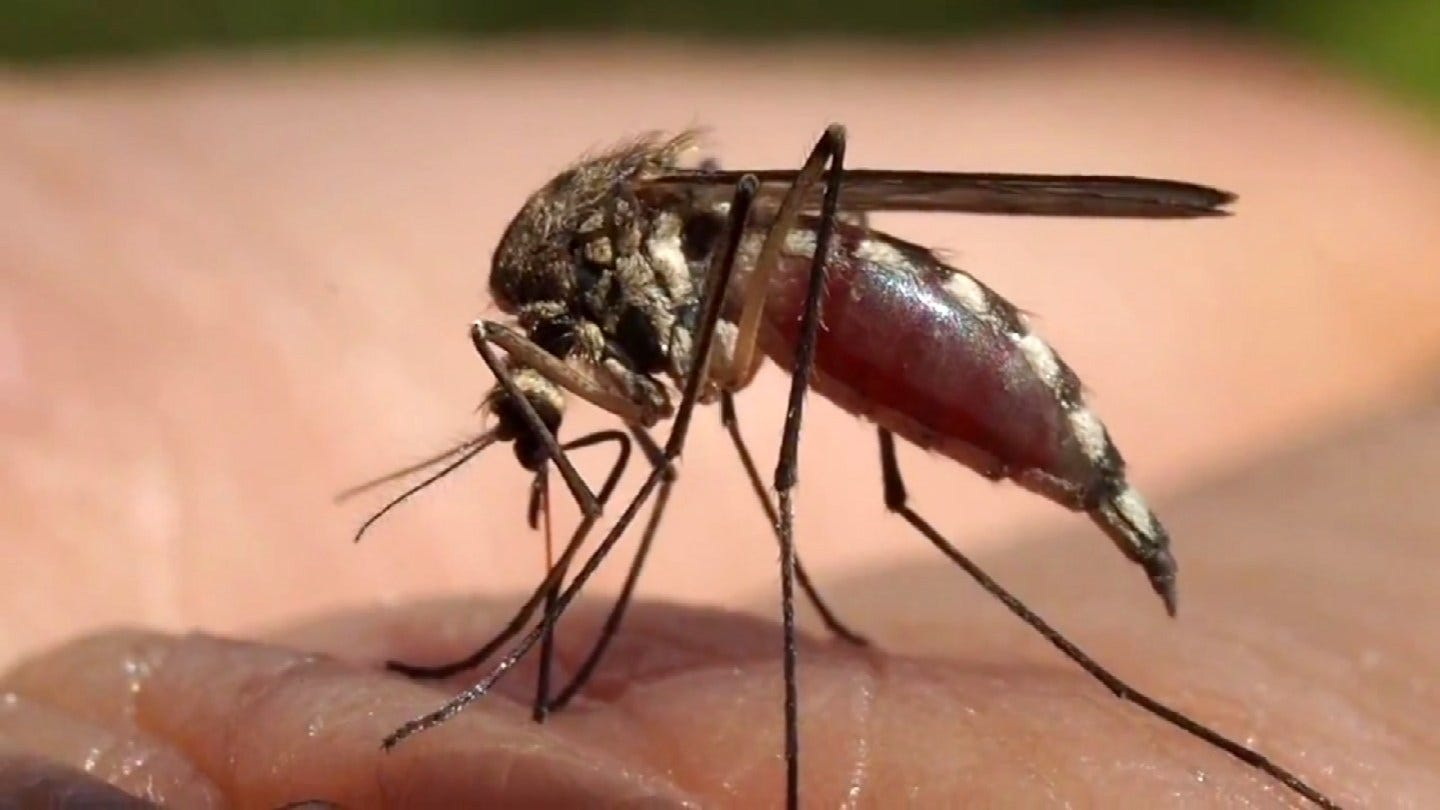 More Mosquitoes Test Positive For West Nile In Tulsa County