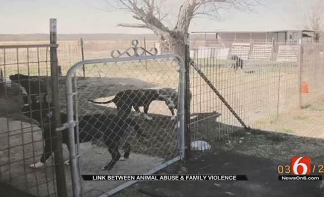 Oklahoma Sheriffs: Many Animal Abusers Become Domestic Abusers