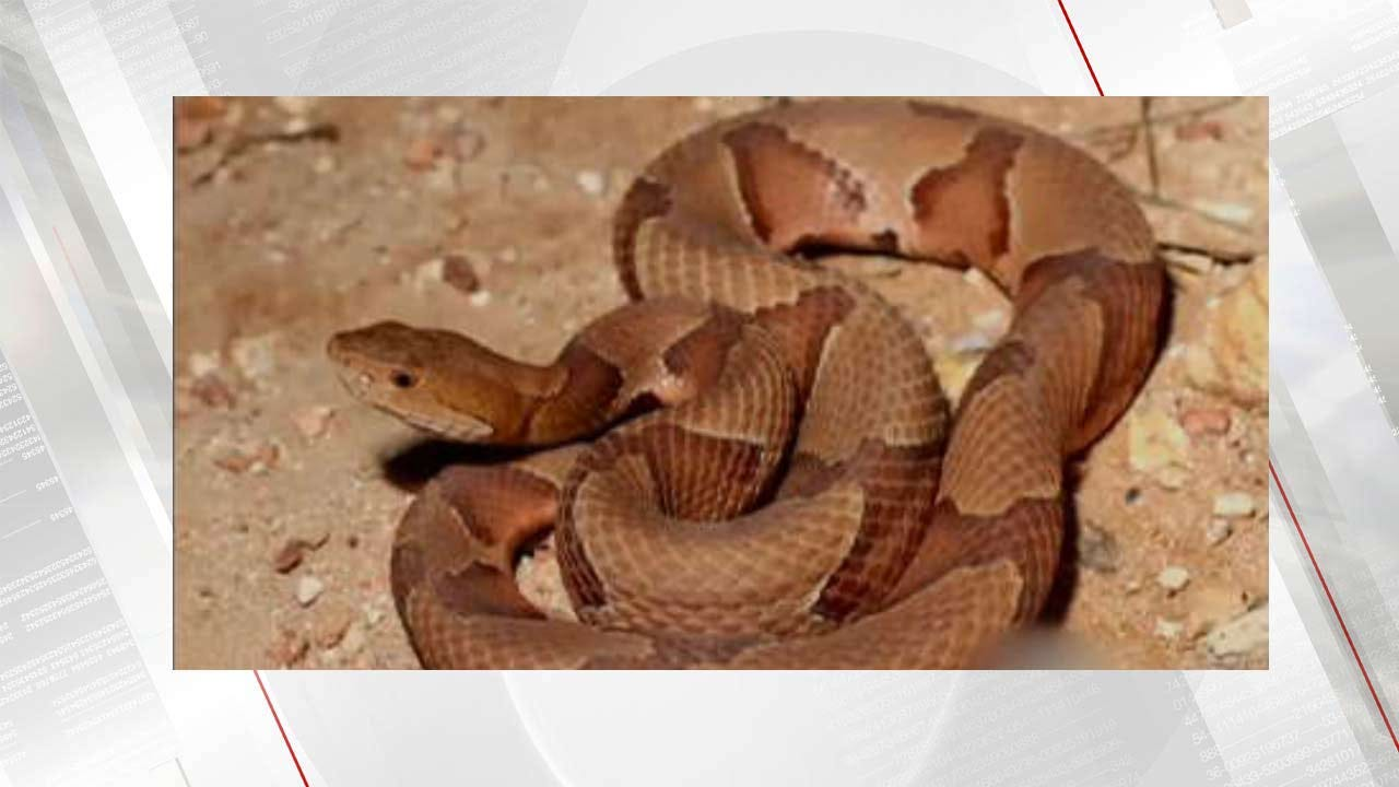 Atoka County Boy Flown To Hospital After Copperhead Bite